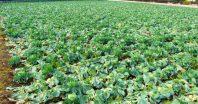 生産緑地の2022年問題、その対応策とは?